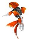 Goldfish 16x20