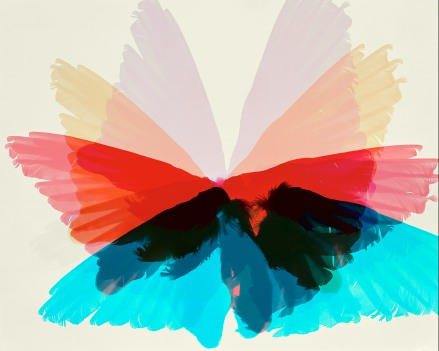 Doug_Fogelson_Bird_Wings