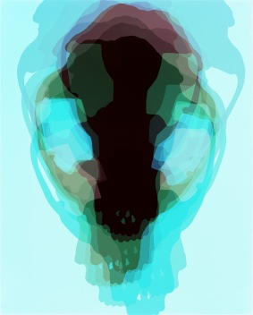 Doug_Fogelson_Fox_Skull