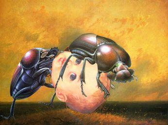 dung-beetle