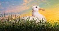 horizontal-duckrabbit