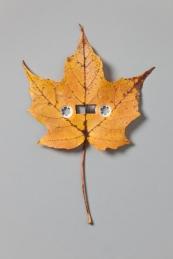 """Sounds of Autumn, 2013, archival pigment print, 36 x 24"""""""